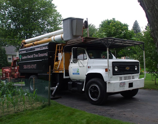 We offer a full service tree removal program